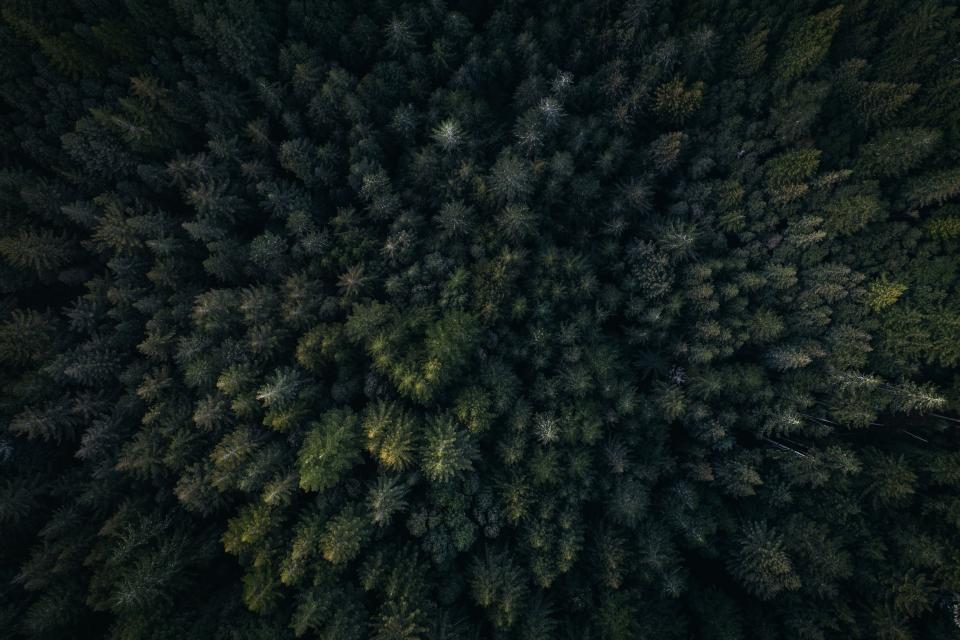 green leaf trees plants nature outdoor aerial view forest