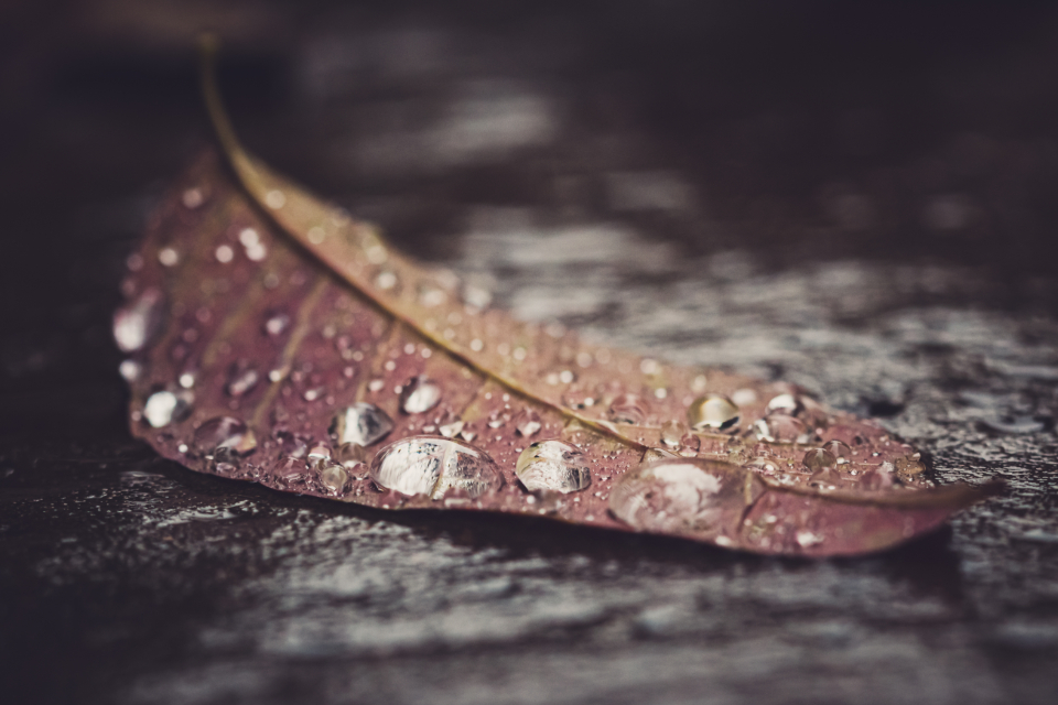 water leaf macro close up dew rain drops wet nature environment climate fall outdoors minimal