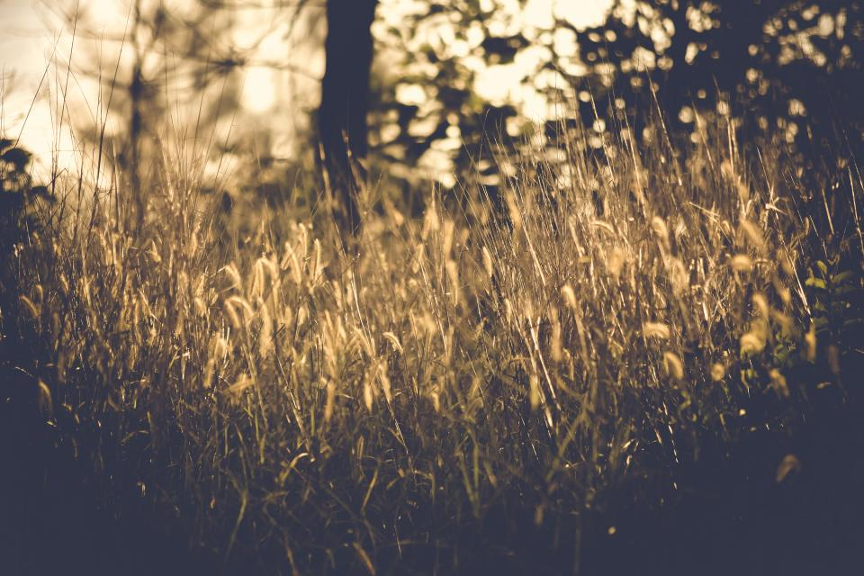 grass blur outdoor nature plant bokeh trees