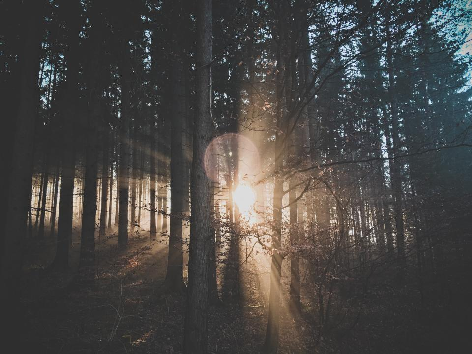 nature landscape trees forest sun solar flares sunlight leaves branches