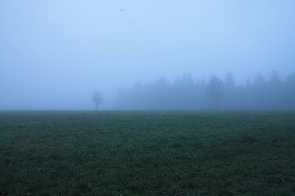 fog green blue field grass nature