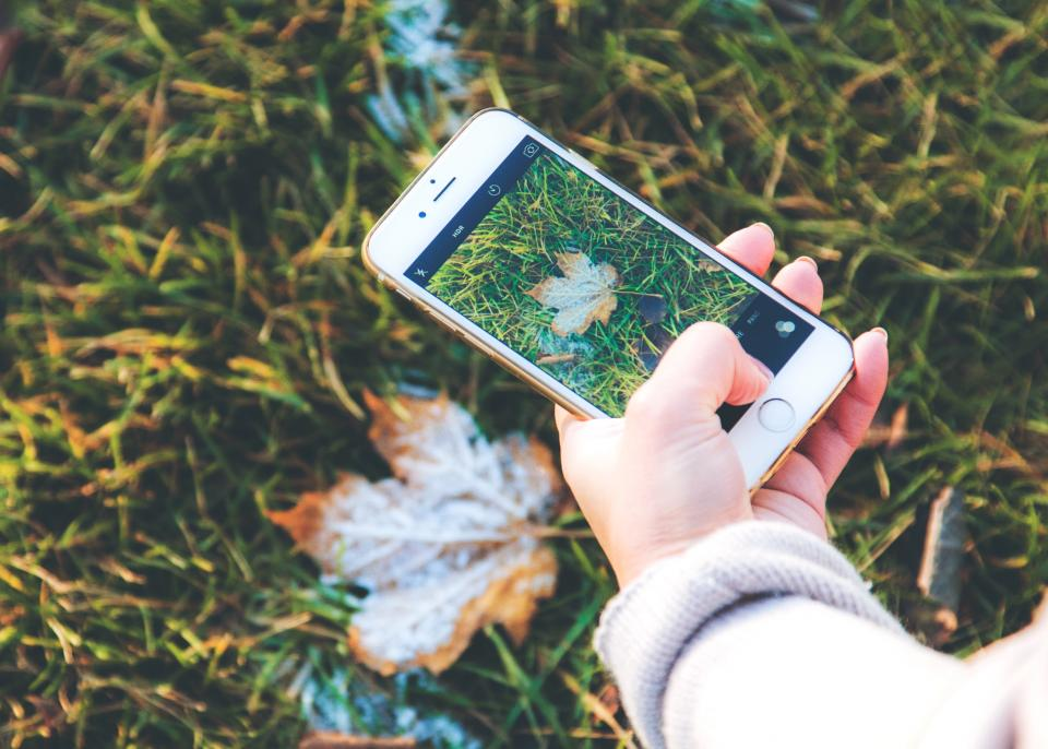 mobile phone camera photography electronic gadget modern technology touchscreen leaf fall green grass outdoor