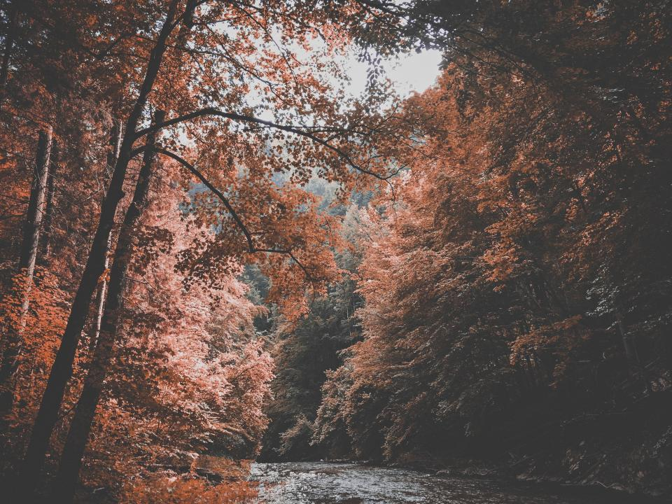 nature landscape trees forest stream river branches trees lush picturesque