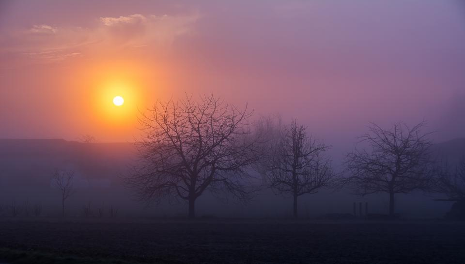 sunrise morning fog foggy trees nature landscape sky clouds