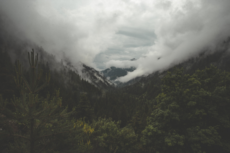 fog mountain forest valley clouds mist nature outdoors travel explore adventure weather climate environment woods trees landscape moody haze gloomy scenic spooky hills mysterious