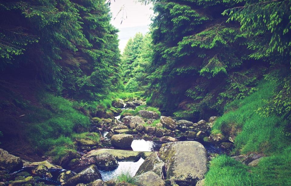 river stream water rocks hiking trekking outdoors adventure nature green trees forest woods