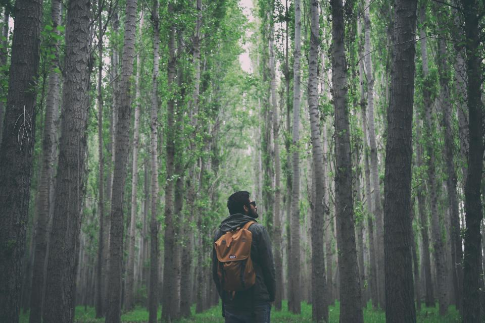 nature woods forest people man guy backpack shades travel millenials