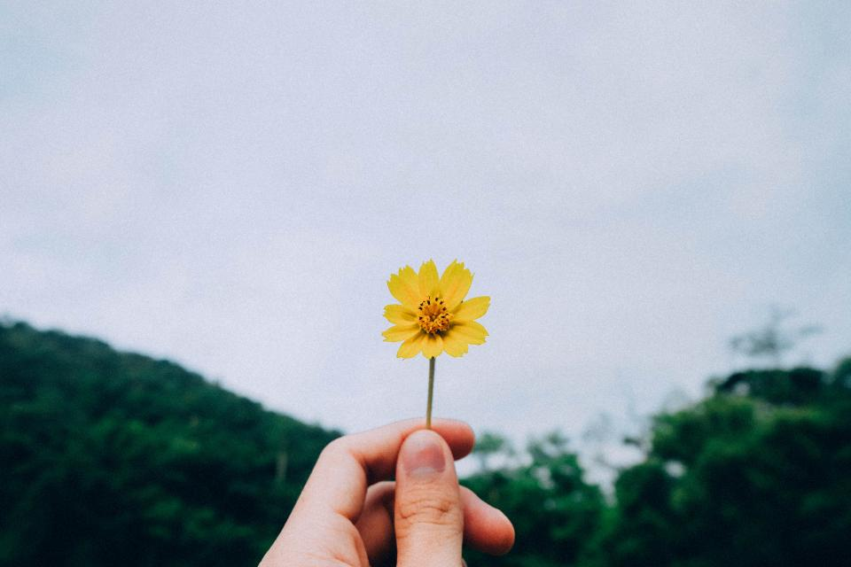 green trees plant nature sky yellow flower hand