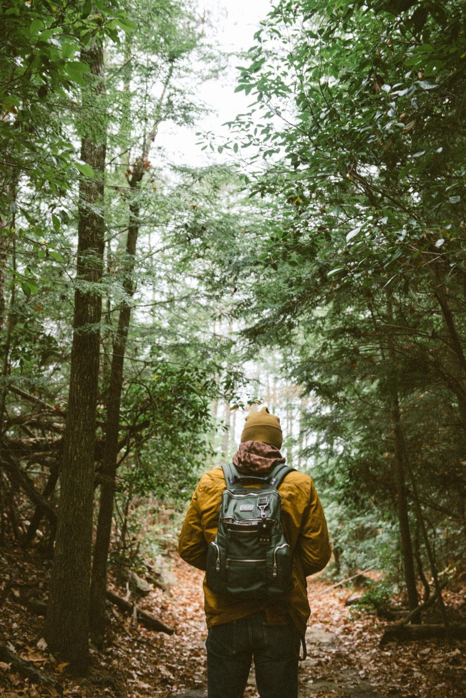 backpack people hiking walking man beanie path road trees plant forest