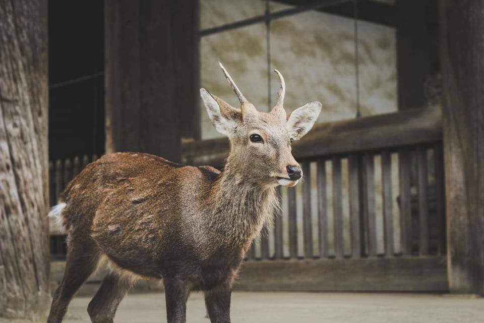 deer animal wildlife wooden house