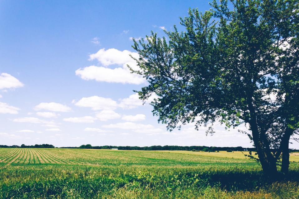 green grass crops agriculture farm field outdoor tree plants view clouds sky nature