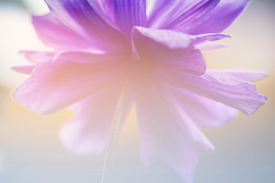 Free stock photo of abstract flower