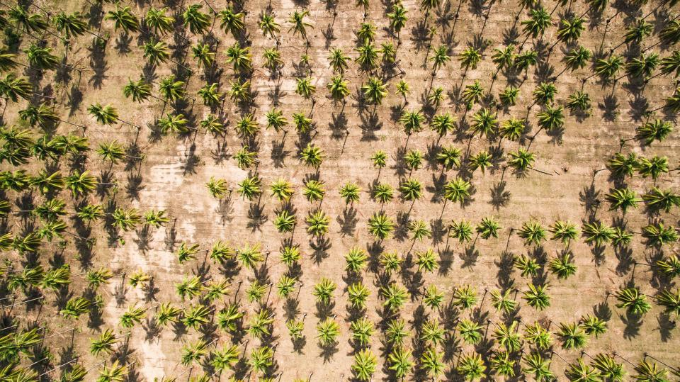 Free stock photo of aerial coconut