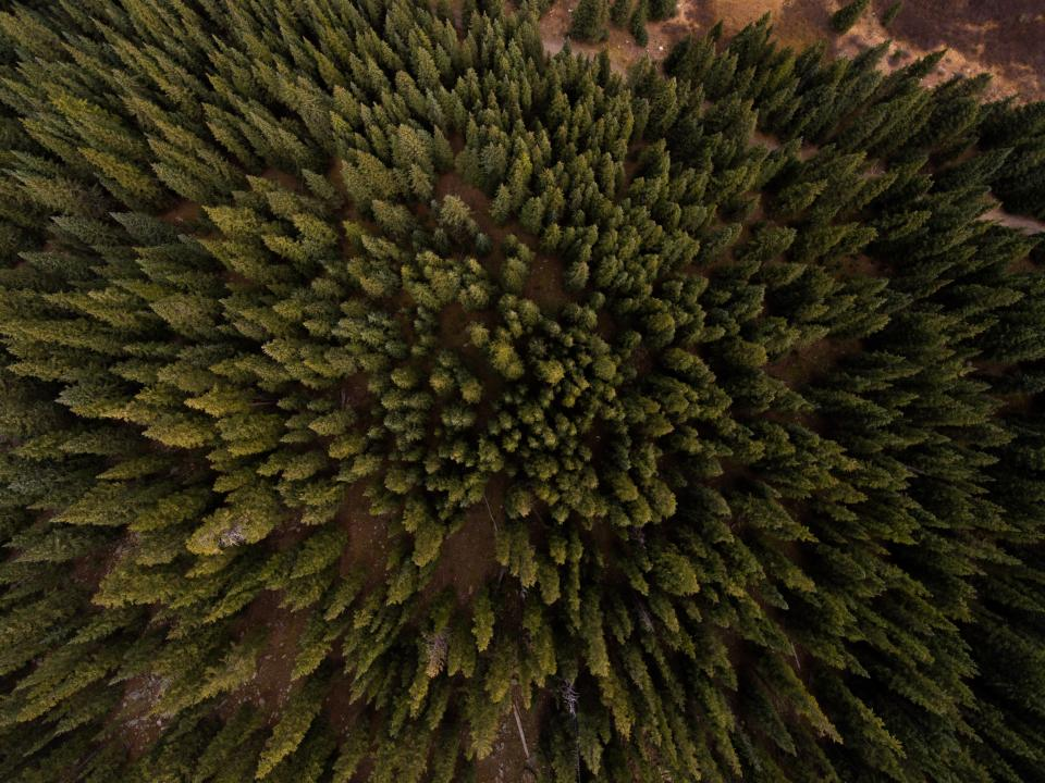 aerial view pine