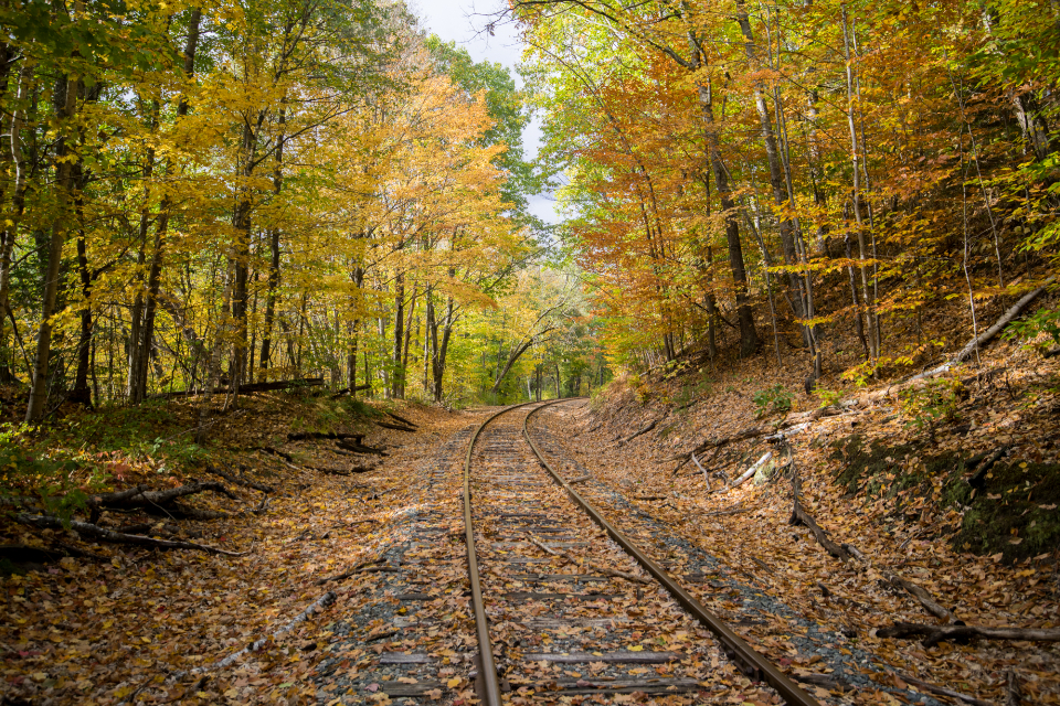 Free stock photo of autumn forest