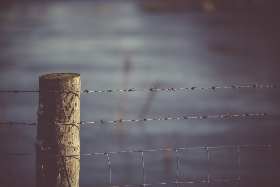 Free stock photo of barbed wire