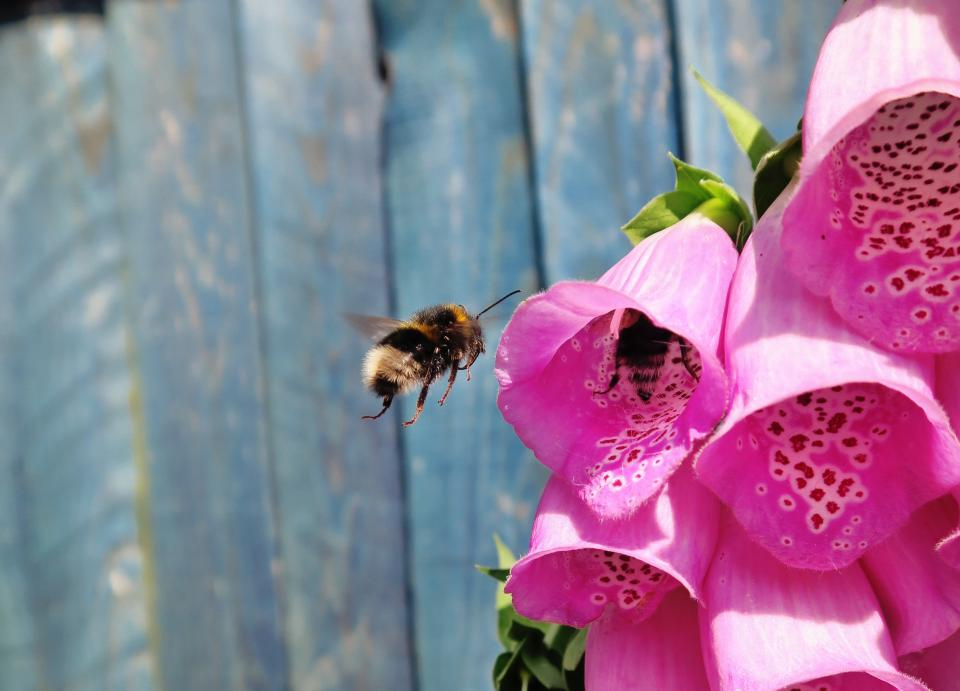 bee insect pink