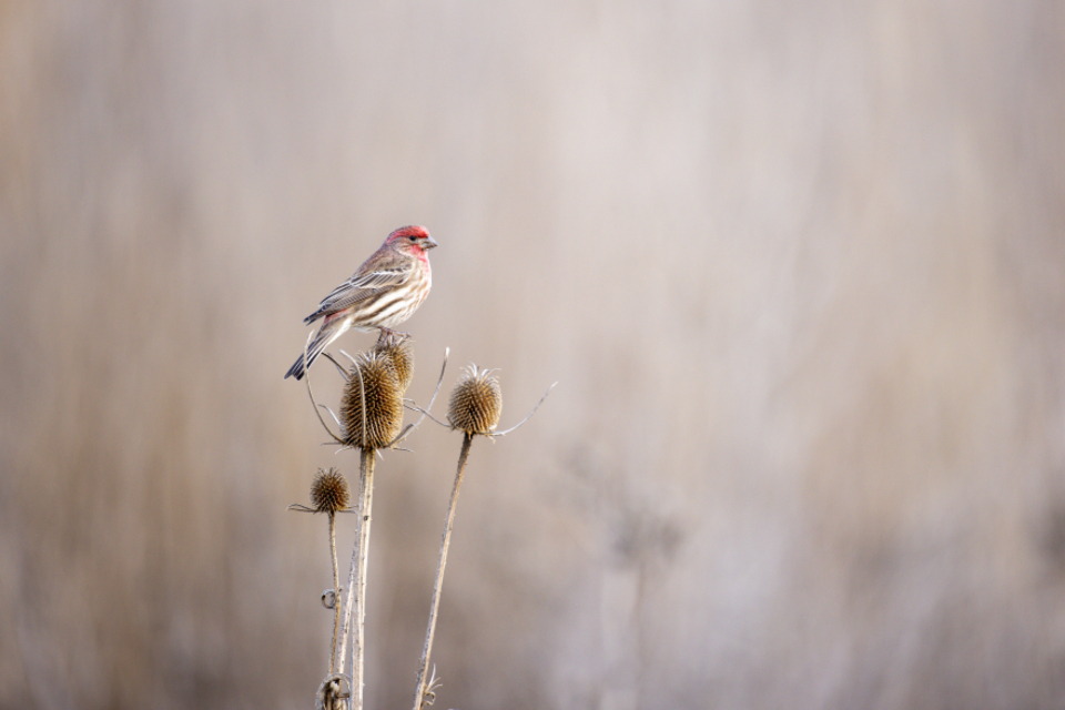 Free stock photo of bird perched