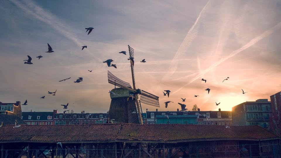 bird sunset windmill