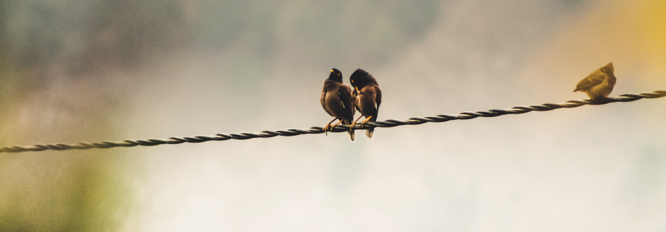Free stock photo of birds wire