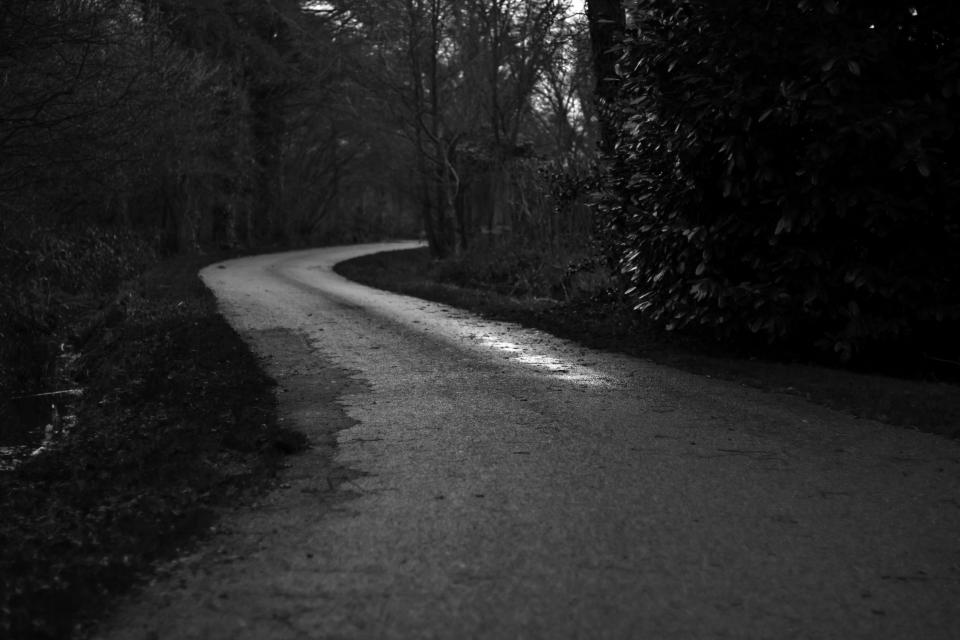 black and white trees road