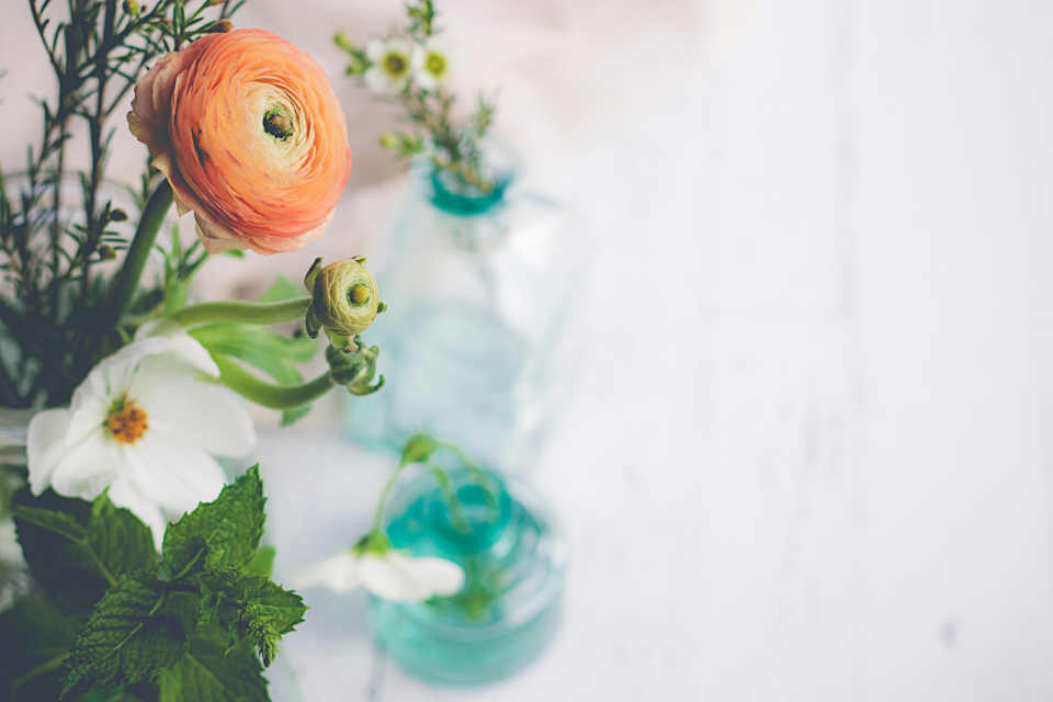Free stock photo of botanicals floral