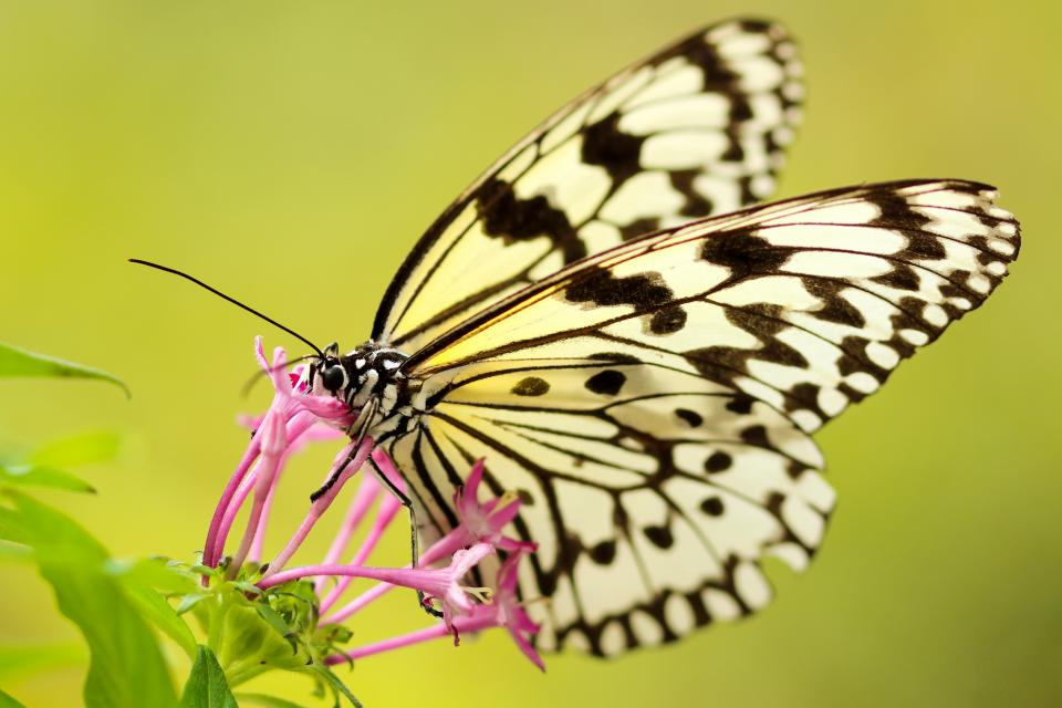butterfly moth insect