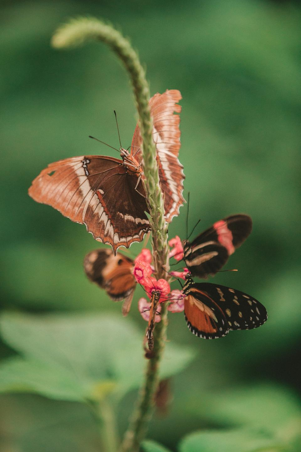 Free stock photo of butterfly moth