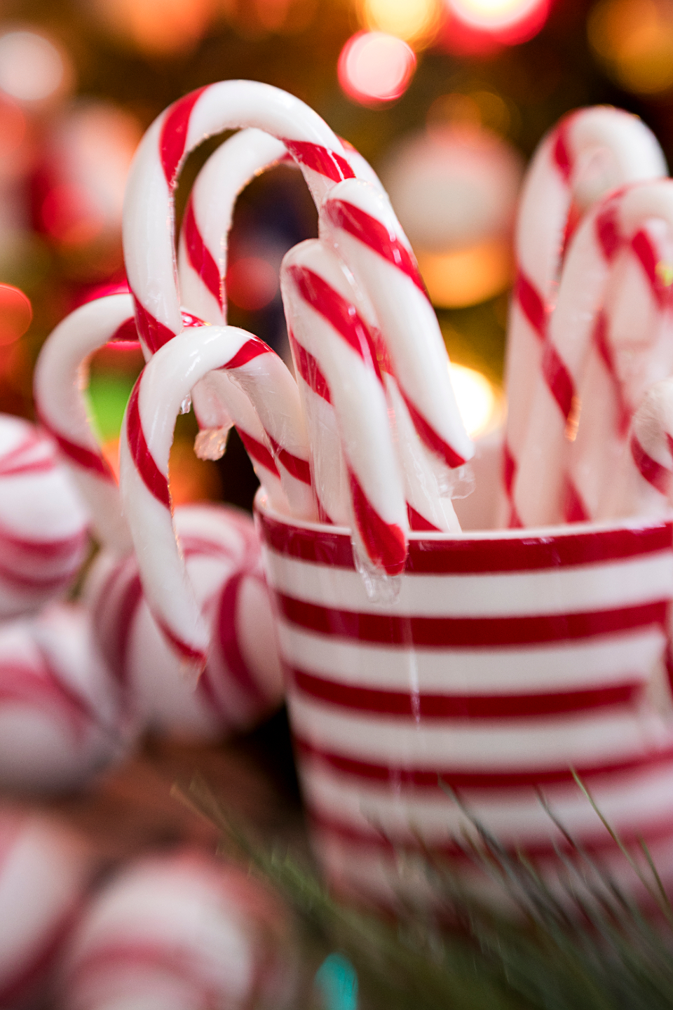 Free stock photo of candy canes