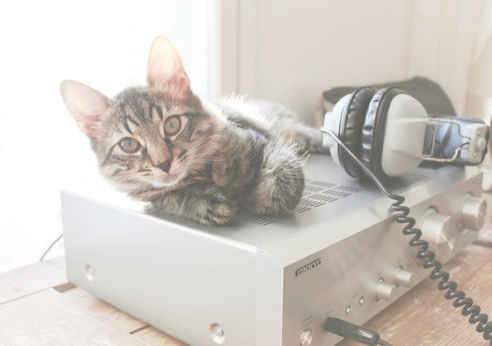 cat amplifier headphones