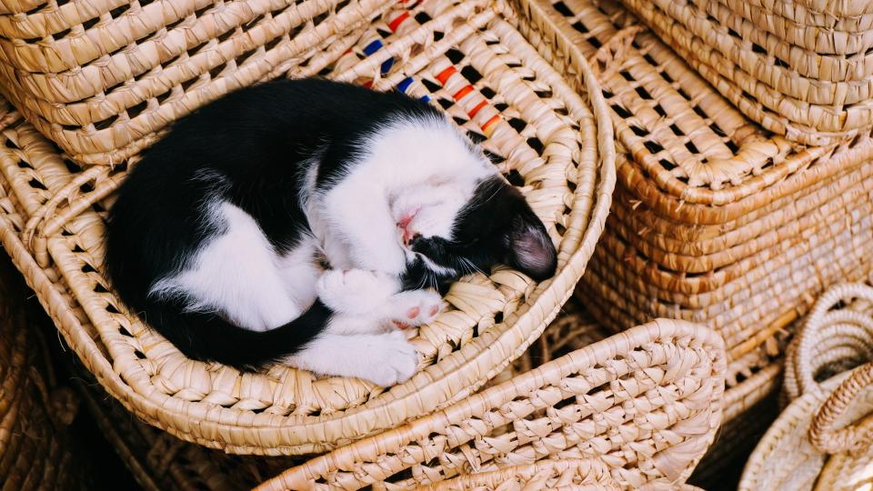 cat kitten sleep