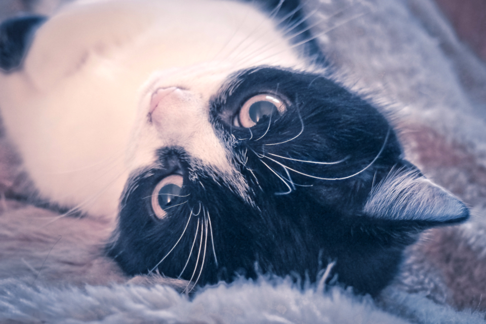 cat relaxed eyes