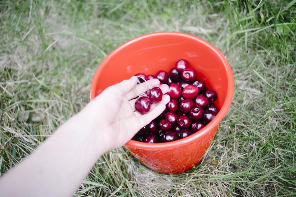 cherries bucket fruits