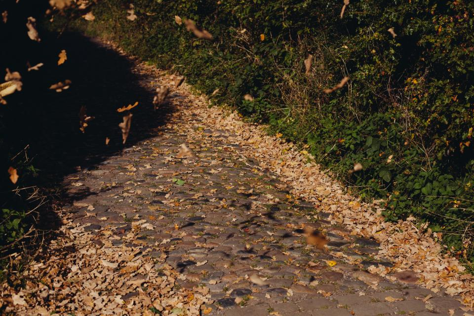 cobblestone path leaves