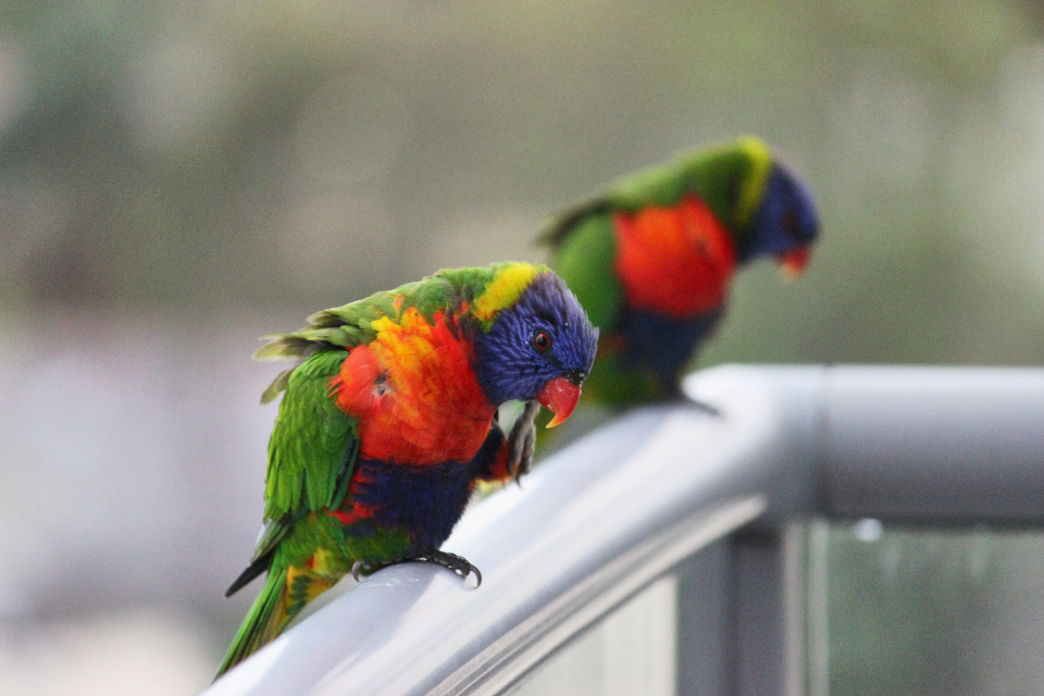 colorful birds nature