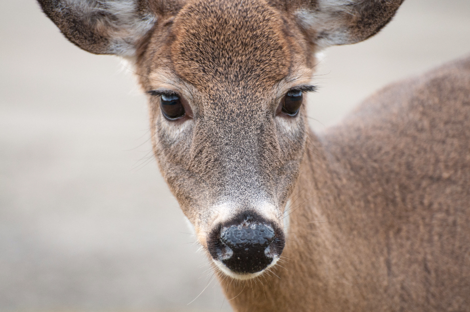 deer animal cute
