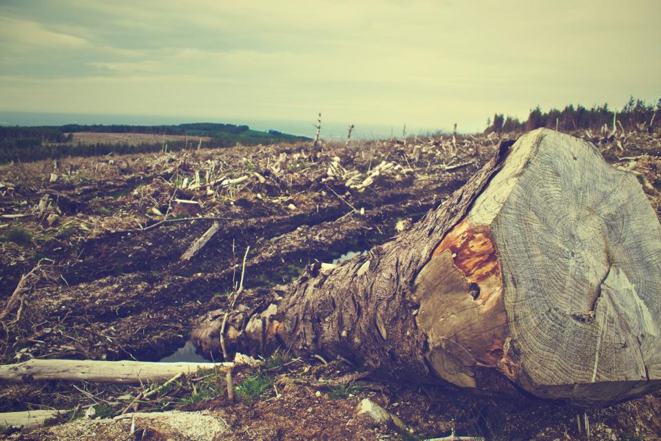 deforestation trees logs