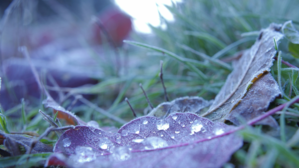 drops leafs frostiness