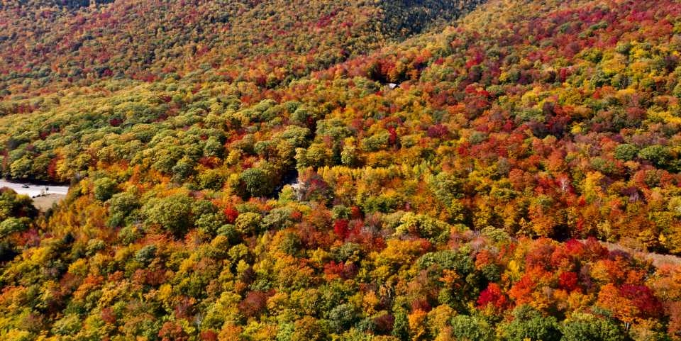 Free stock photo of fall aerial