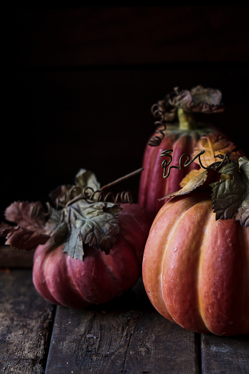 Free stock photo of fall pumpkins
