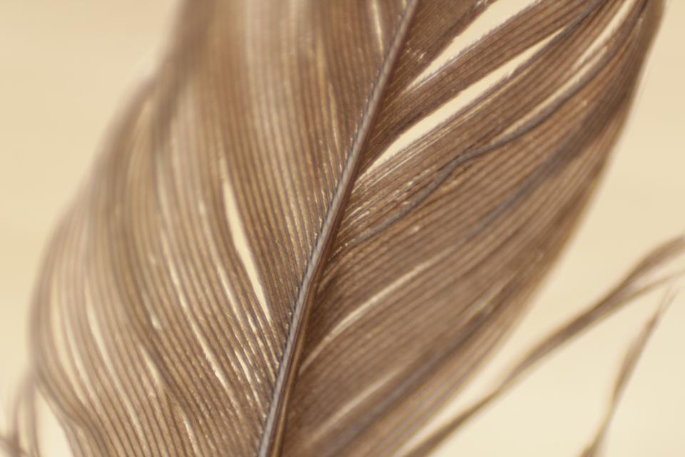 feathers plumage texture