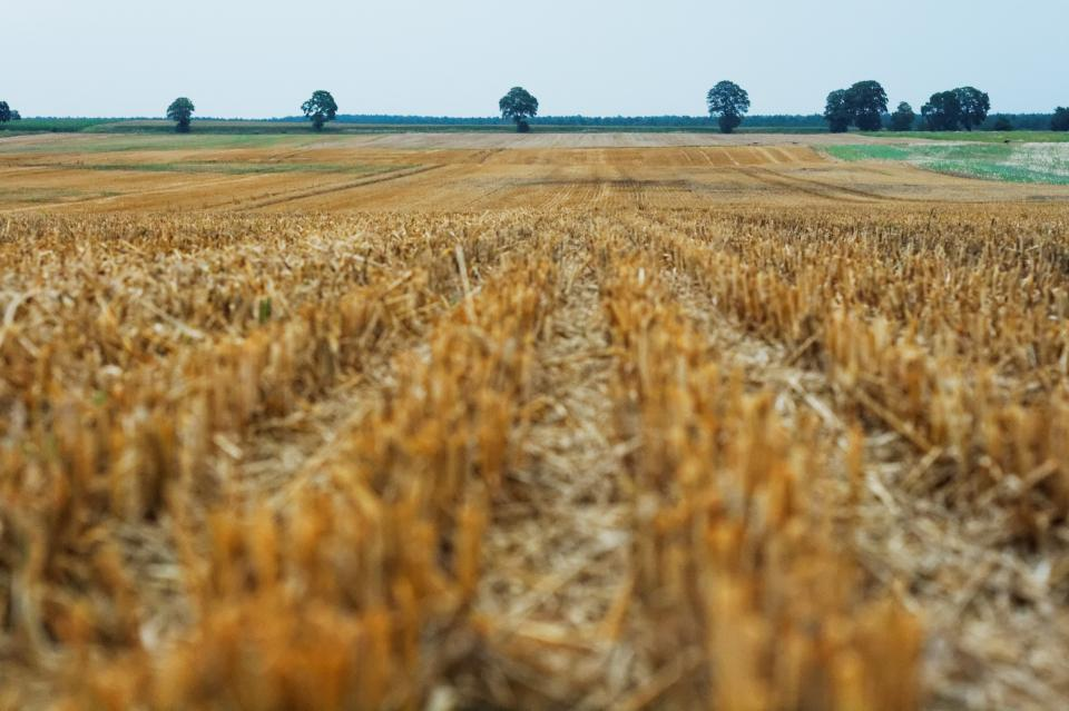field crops agriculture
