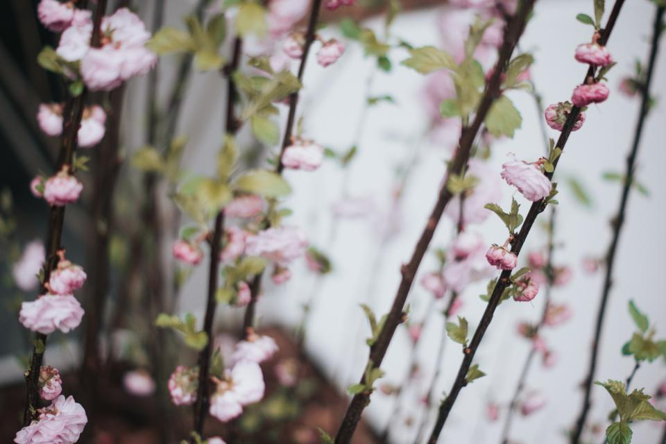 Free stock photo of flower bloom