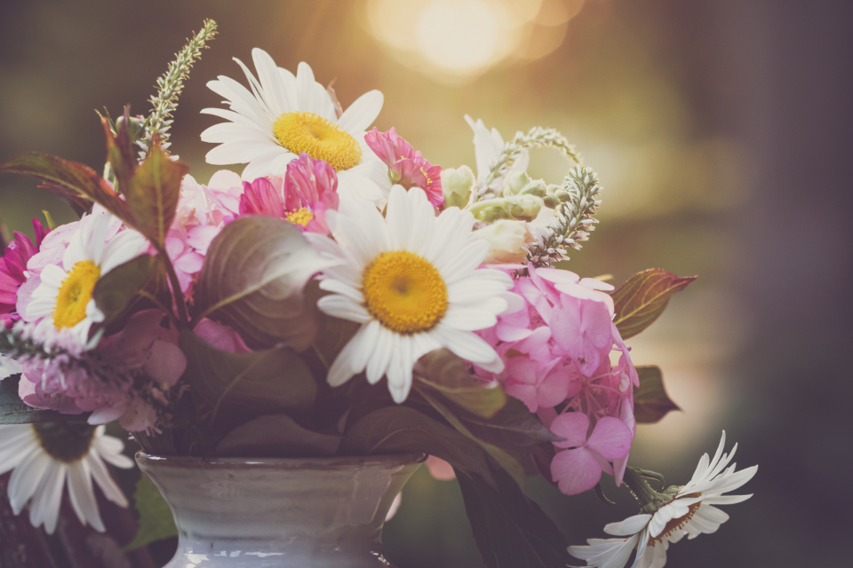 Free stock photo of flower bouquet