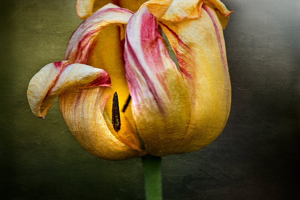 Free stock photo of flower painting