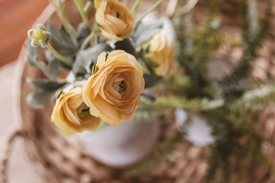 Free stock photo of flowers bouquet