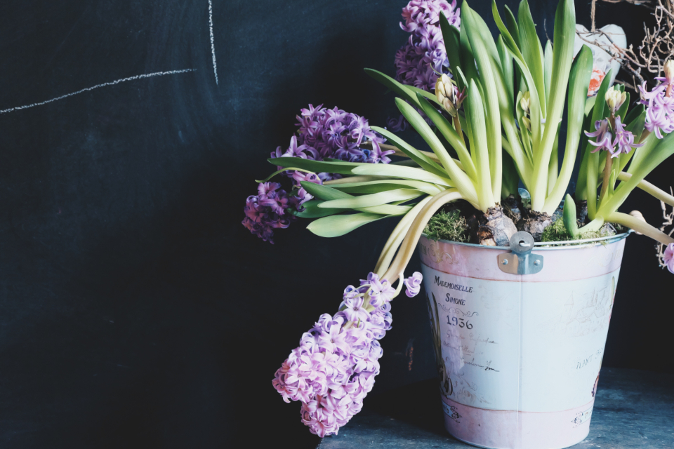 Free stock photo of flowers natural