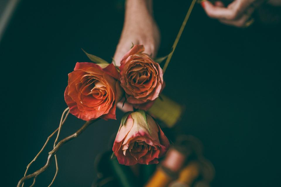 Free stock photo of flowers nature