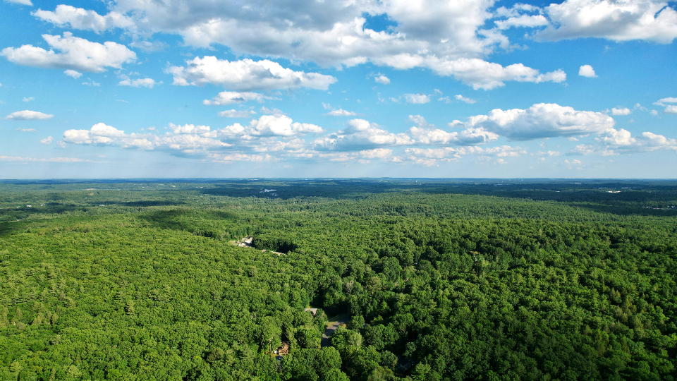 Free stock photo of forest aerial