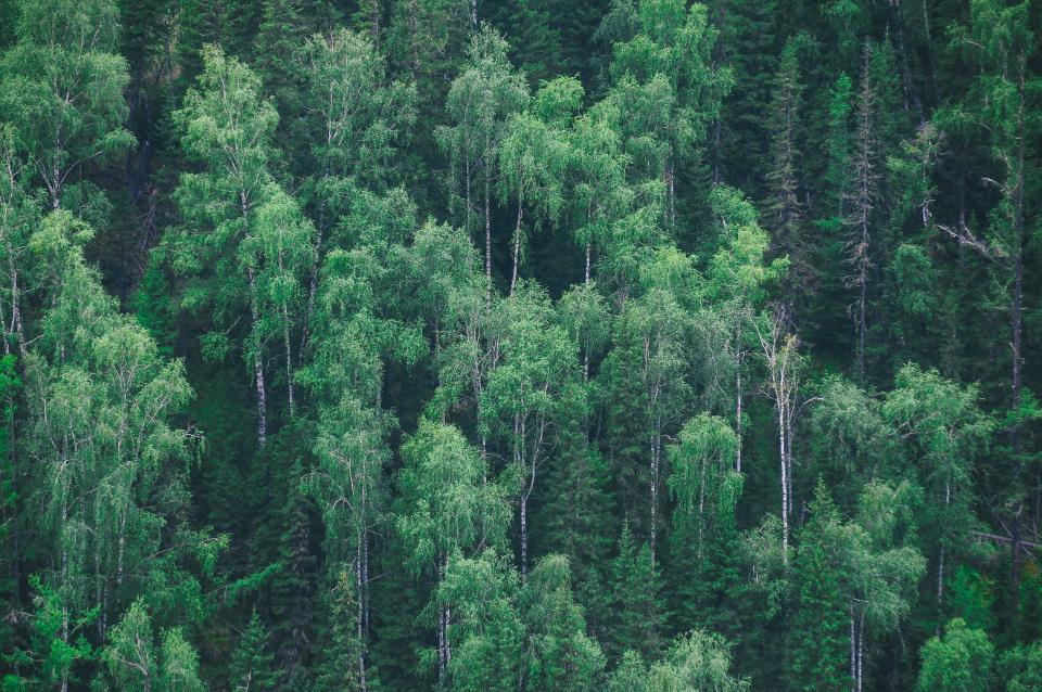 forest trees green